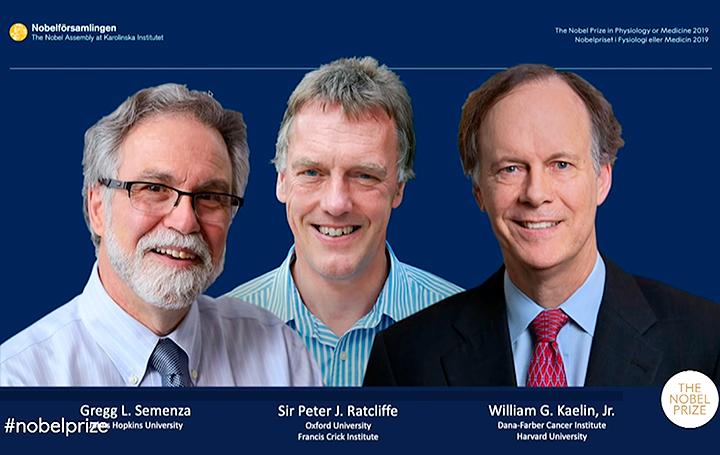 Los tres ganadores: William Kaelin y Gregg Semenza (Estados Unidos) y Peter Ratcliffe (Reino Unido).