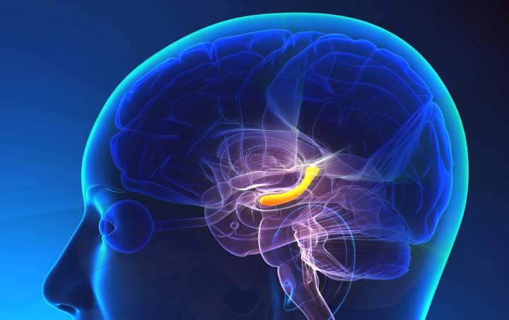 El hipocampo se protege de la radiación